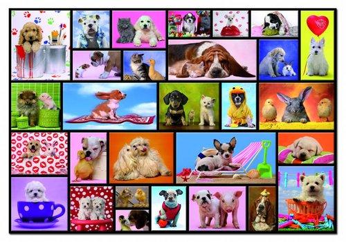 Funny animals - 1000 pieces