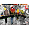 Educa Birds on the jungle - black/white - puzzle of 500 pieces