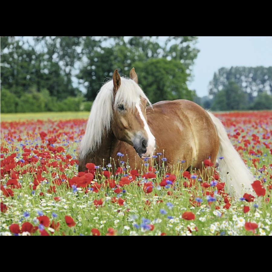 Paard tussen de klaprozen - 500 stukjes-1
