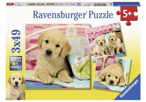 Schattige puppy's - 3 x 49 stukjes