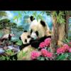 Educa Panda's - legpuzzel van 1000 stukjes