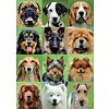 Educa Allemaal honden - legpuzzel van 500 stukjes