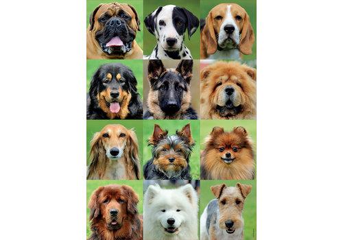Collage des chiens - 500 pièces