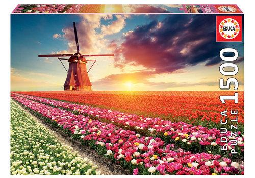 Champs de tulipes - 1500 pièces