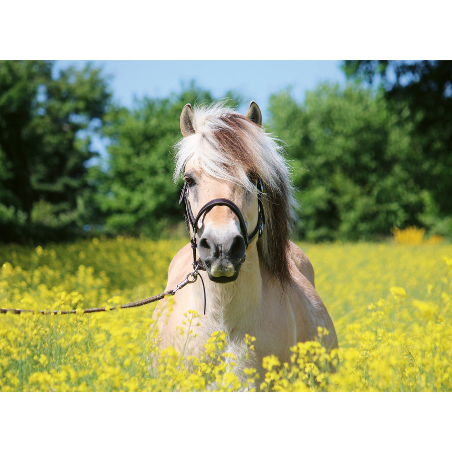 Horse among the flowers - jigsaw puzzle of 500 pieces-1