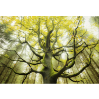 thumb-Droom boom - puzzel van 1000 stukjes-1