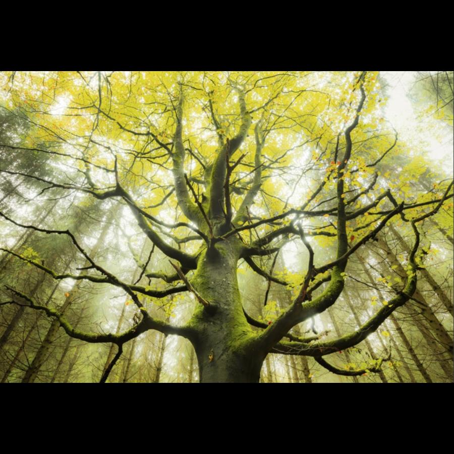 Droom boom - puzzel van 1000 stukjes-1