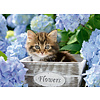 Ravensburger Petit chaton - 300 pièces