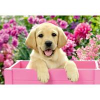 thumb-Les chiens dans le panier - 2 puzzles de 24 pièces-3