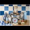 Schmidt Katten in de keuken - 500 stukjes