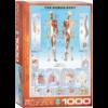 Eurographics Puzzles Het menselijk lichaam - puzzel van 1000 stukjes