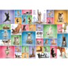 Eurographics Puzzles Yoga Dogs - Collage - puzzel van 1000 stukjes