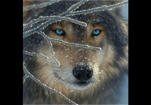 SUNSOUT Wolf - 500 stukjes