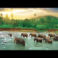 thumb-La forêt tropicale - puzzle de 1000 pièces-2