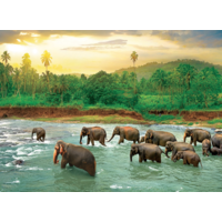 thumb-The rainforest - 1000 pieces - jigsaw puzzle-2