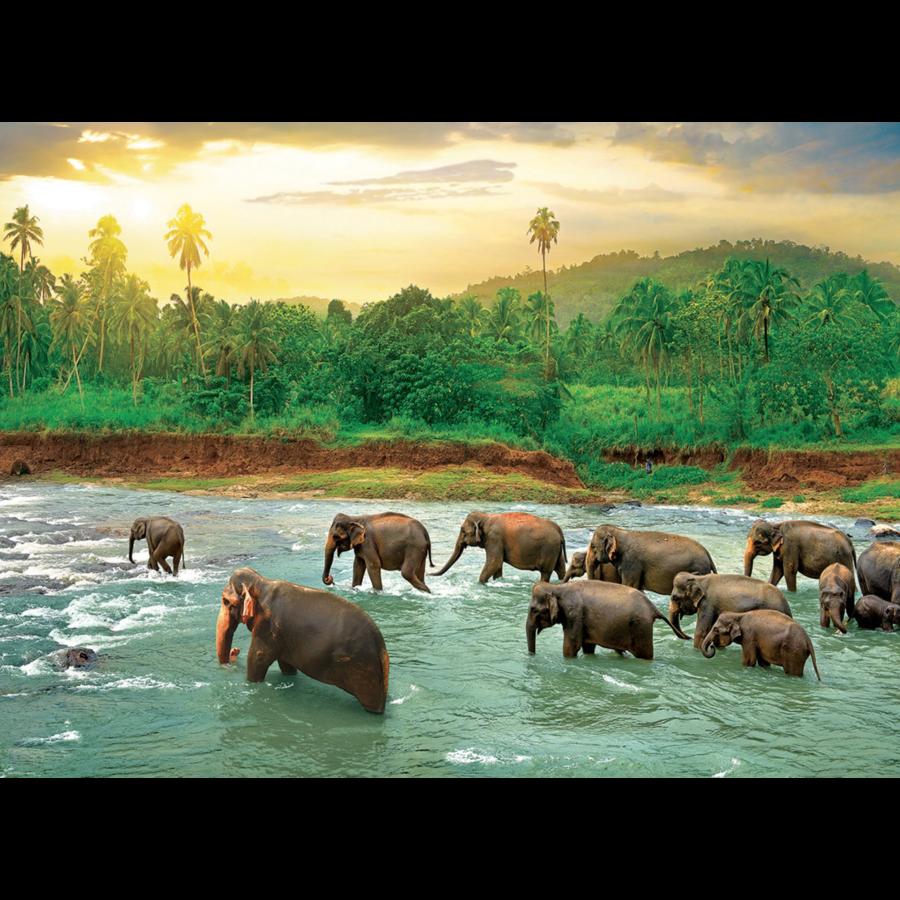 La forêt tropicale - puzzle de 1000 pièces-2