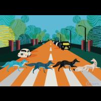 thumb-Abbey Road Foxes - puzzel van 500  stukjes-1