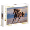Clementoni Wild Paard - puzzel van 1000 stukjes