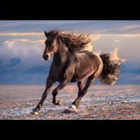 thumb-Wild Paard - puzzel van 1000 stukjes-2
