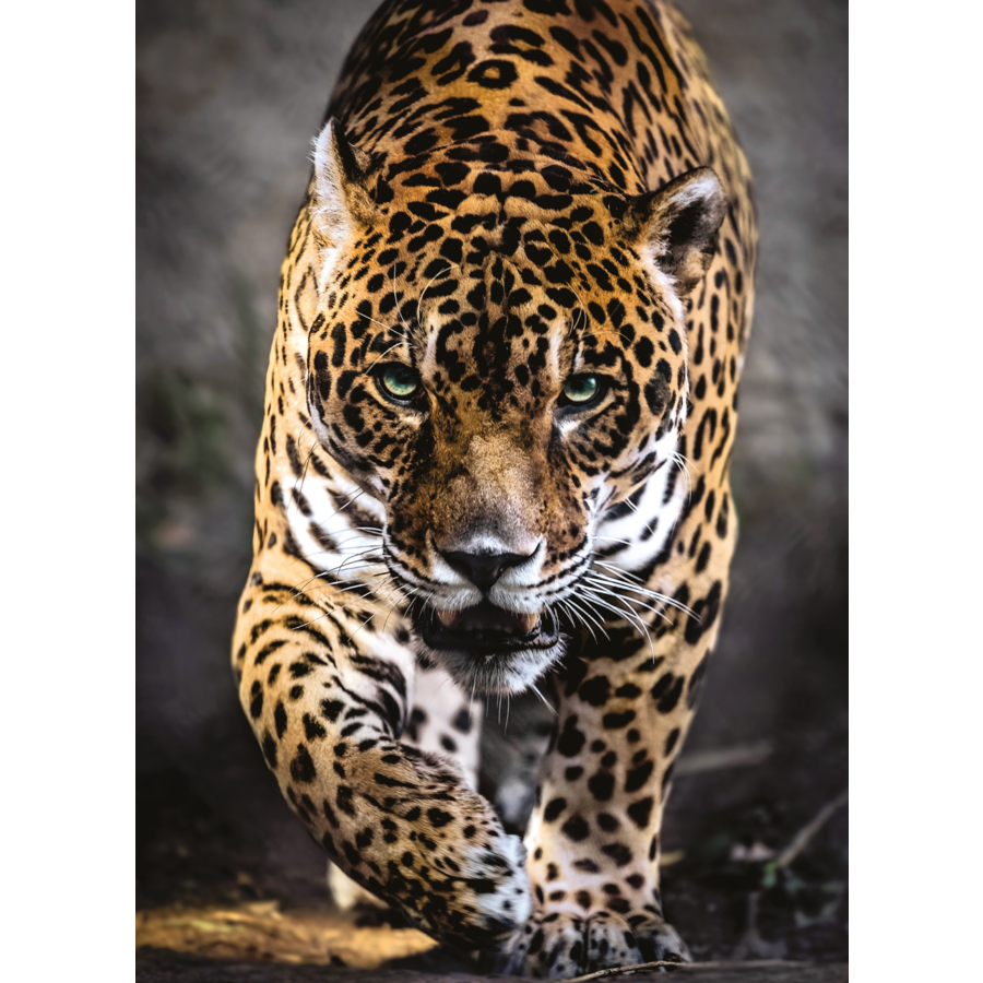 Jaguar - puzzel van 1000 stukjes-1