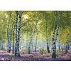 Ravensburger Forêt de bouleaux - puzzle de 1000 pièces