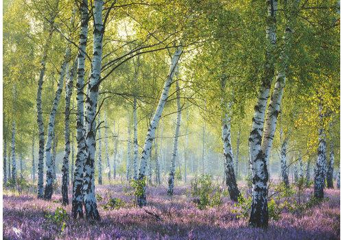 Ravensburger Forêt de bouleaux - 1000 pièces