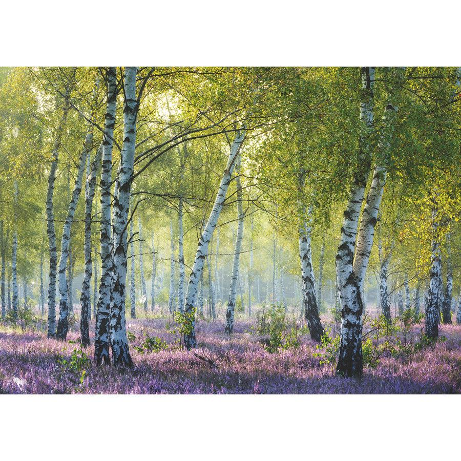 Forêt de bouleaux - puzzle de 1000 pièces-1