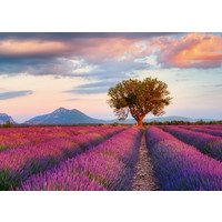 thumb-Lavendel velden - puzzel van  1000 stukjes-2