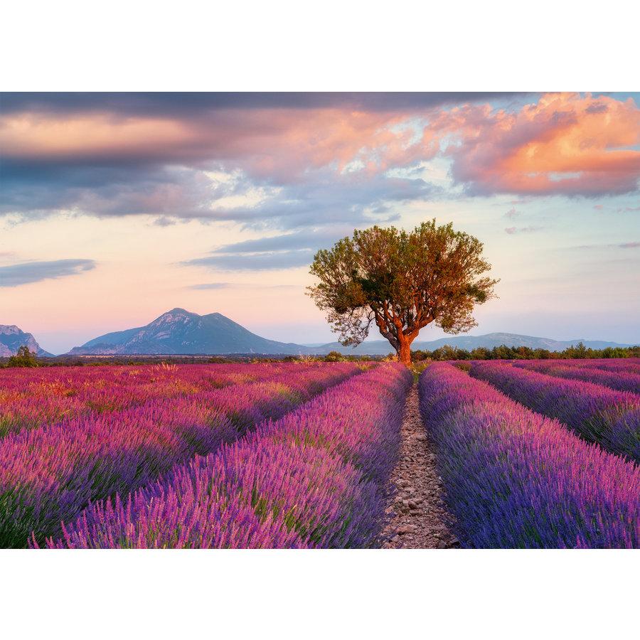 Lavendel velden - puzzel van  1000 stukjes-2