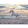 Ravensburger Paard op het strand - puzzel van 500 stukjes