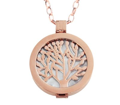Complete Muntketting Pearl Family Tree rose goudkleurig