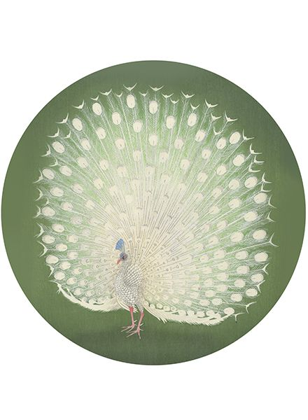 Tapit Peacock D: ±190cm