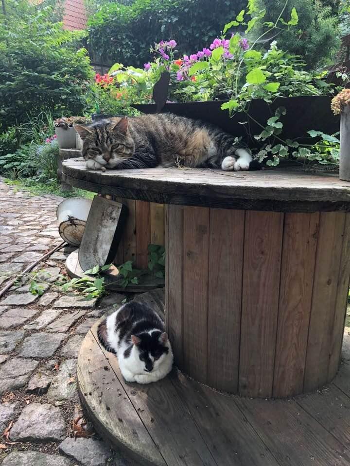 unsere Katzen Mascha und Rainer sind immer dabei.....