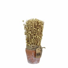 Strömshaga Harvest in Pot Flax small