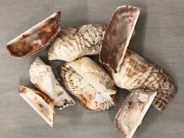 Schelpen Peanut shell