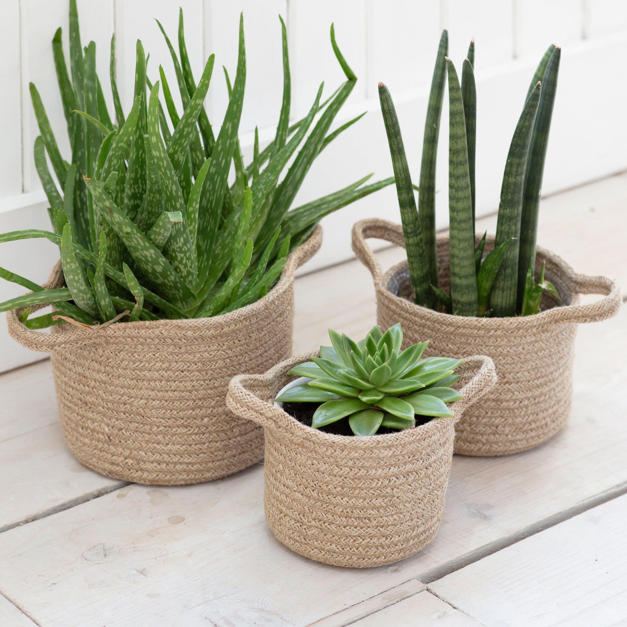 Garden Trading Set van 3 geweven plantenpotten