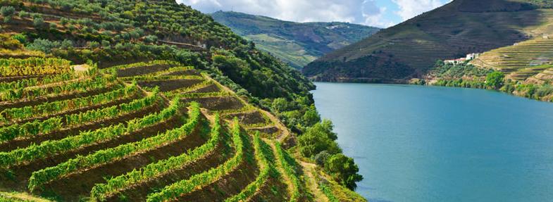 Wijn uit Portugal Wijnmarkt