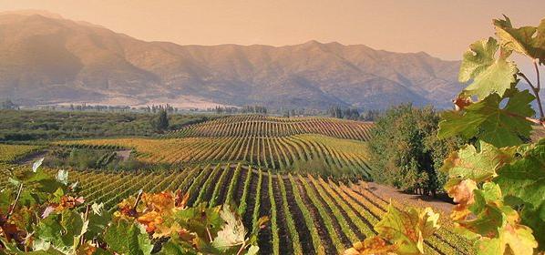 Chileense wijn Wijnmarkt