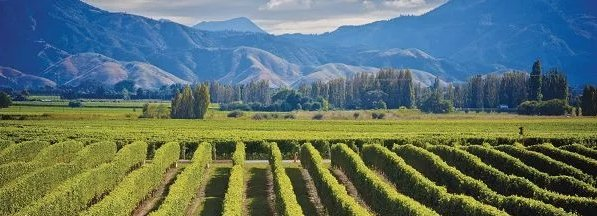 Sauvignon blancs uit Nieuw-Zeeland