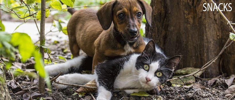 Lekkerste snacks voor hond en kat