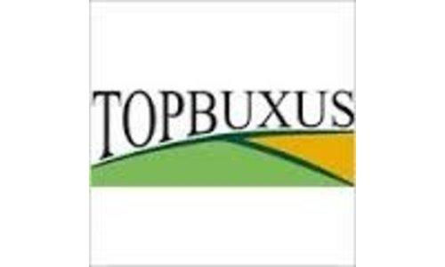 Top-Buxus