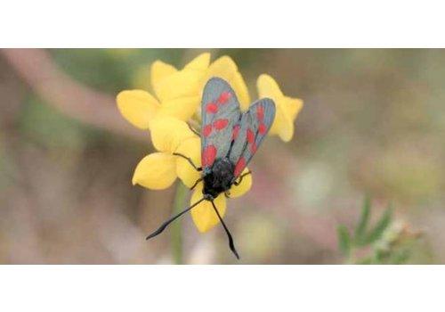 Vlindermengsel