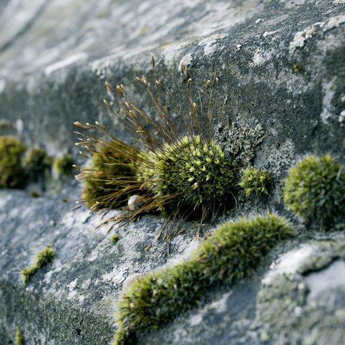 Groene aanslag, mos en algen