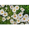 Biotoop Bloemen- en kruidenmengsel