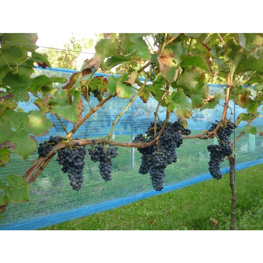 Vogelnet Vinea Wijnbouw-2