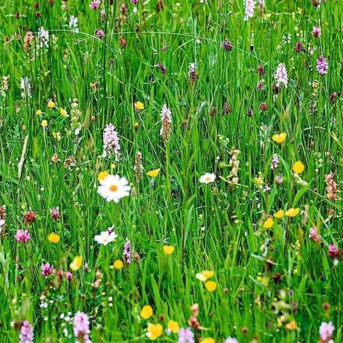 DCM Gras- en bloemzaden