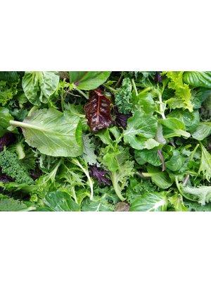 Gärtnerei Schönherr (Bopfingen) Blattsalatmischung küchenfertig (100g)