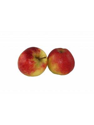 "Fruchthof Dambacher (Aalen) Apfel Elstar ""neue Ernte""  (ca. 150g/Stück)"