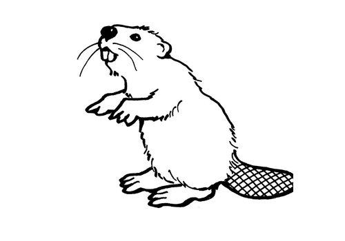 Chuck Beaver Design (Aalen)