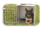 Honden transportboxen